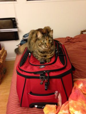 Tigress guarding our luggage