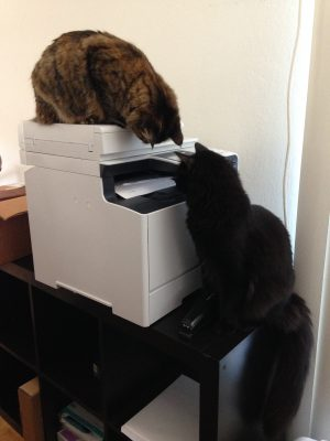 Fritz and Tigress investigating the printer