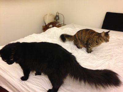 Fritz and Tigress helping change the sheets
