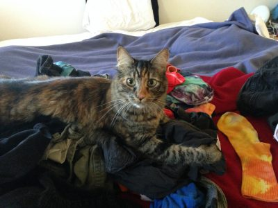 Tigress guarding the laundry