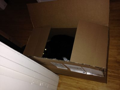 Fritz, stowing away in a box