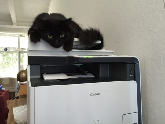 Fritz lurking on the printer