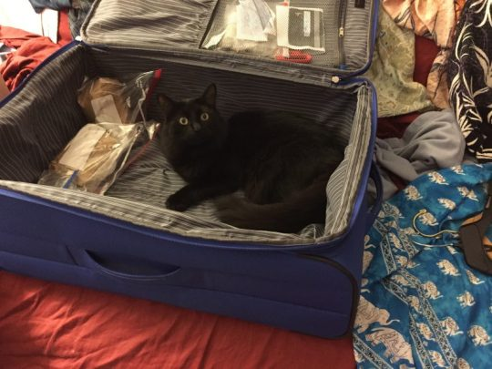 Fritz waiting to be packed