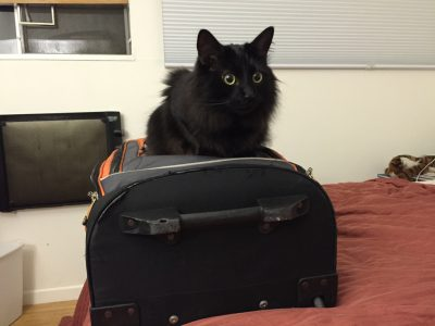 Fritz claiming my luggage