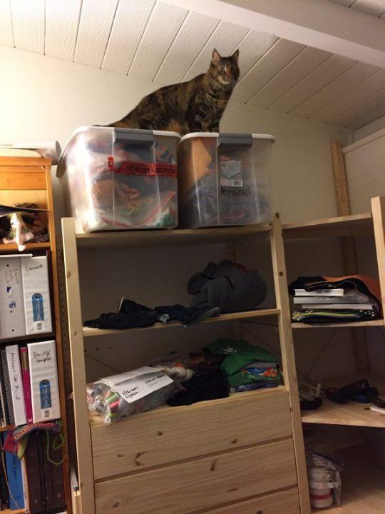 Tigress surveying her new domain