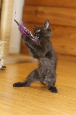 Fritz the kung-fu kitten!