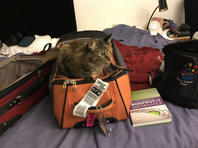 Tigress guarding my luggage