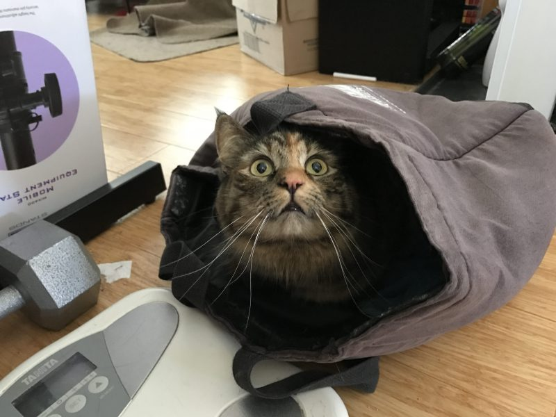 OK, who let the cat into the bag?
