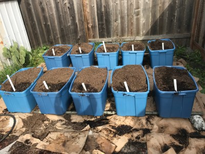 self-watering totes by the shed