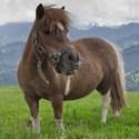 Märchen der Pferdehaltung