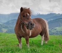 Alex S - Märchen der Pferdehaltung