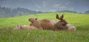 Alex S. - Sommerekzem bei Pferden