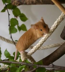 Tina B. - Von jungen und alten Mäusen (2)