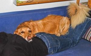 Jacqueline G - Eifersucht beim Hund 2