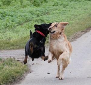 Jacqueline G - Eifersucht beim Hund