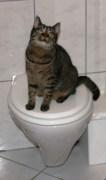 Katharina U - Unsauberkeit bei Katzen
