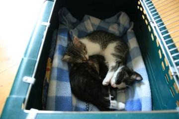 Ankunft Kitten - Samirah S