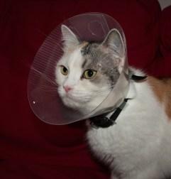 Samirah S - Katze mit Trichter
