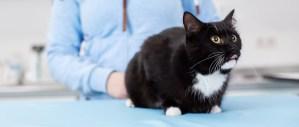 Tierarzt Empelde
