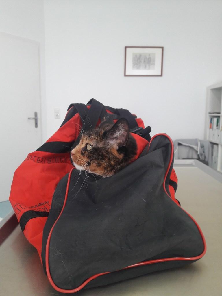 Katzen: Stressfrei zum Tierarzt
