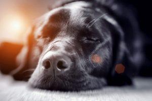 Apathie beim Hund - Zeichen einer Erkrankung
