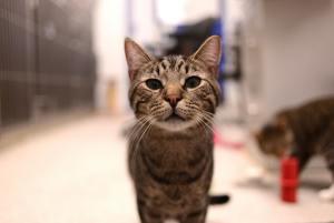 Tierklinik bei Bauchspeicheldrüsenentzündung Katze (Katze Pankreatitis)