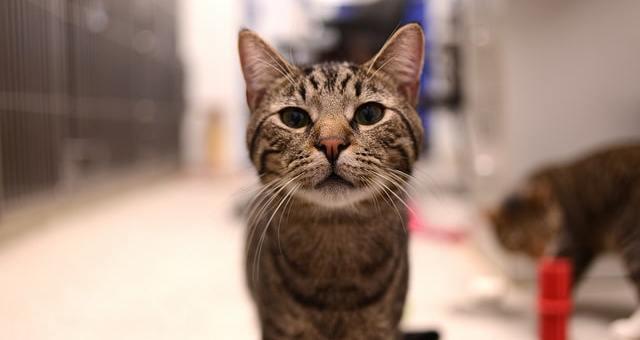 Bauchspeicheldrüsenentzündung Katze (Katze Pankreatitis)
