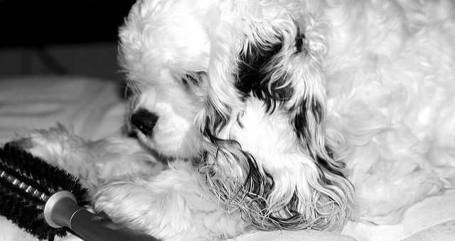 Schuppen beim Hund erkennen & behandeln