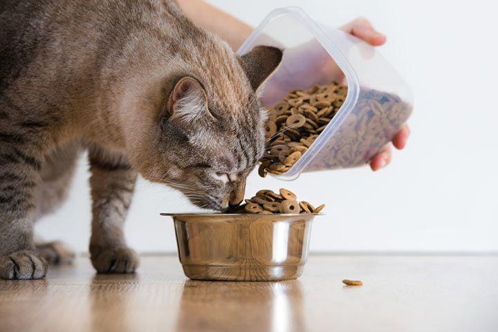 Wie Viel Futter Braucht Eine Katze Und Wie Teuer Ist Das
