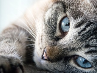 Katzenpflege