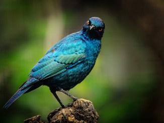 vogel-sehsinn