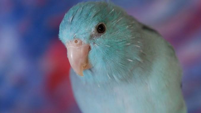 Vogel – Gleichgewichtssinn und Haltung in Gefangenschaft