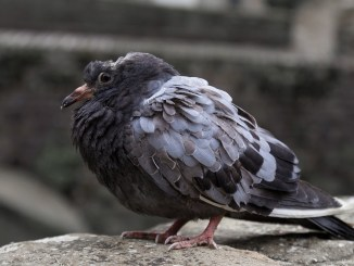 vogelkrankheiten