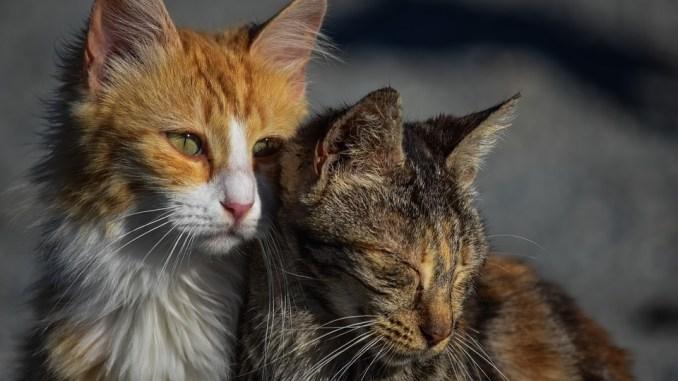 2-katzenbilder