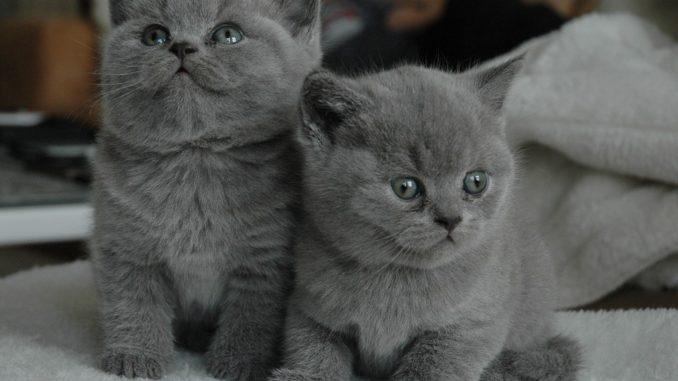 junge-katzen-sueß