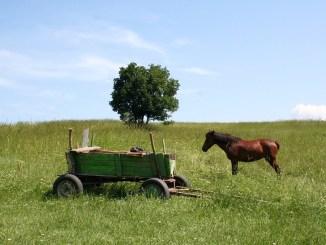 transportversicherung-pferd-bild