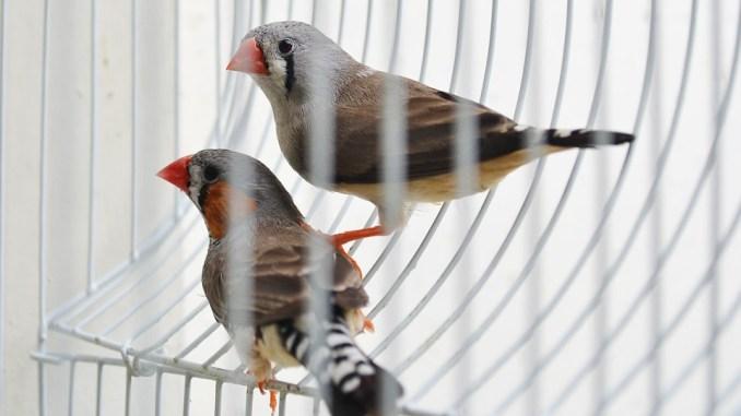 vogelhaltung-2