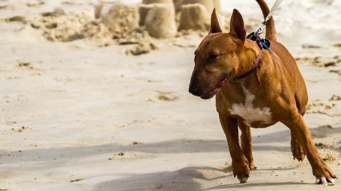 hund-leine-schwerin