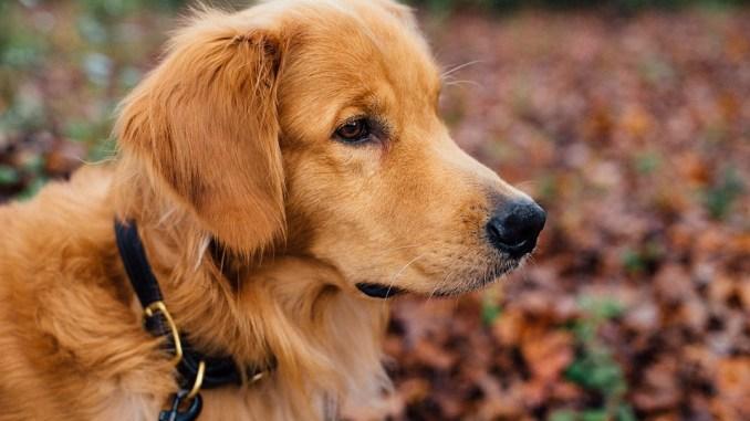 hund-leinenpflicht-braunschweig