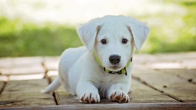 hund-versichern