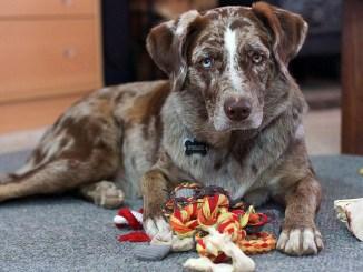 hunde-grundausstattung