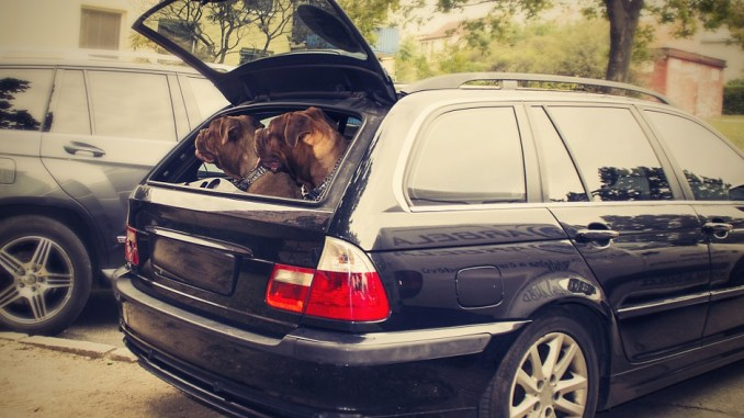 hunde-kofferraum