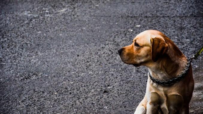 leinenzwang-in-bremen-hund
