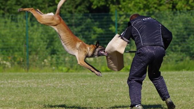 Gemeinsame Hundeabwehr – Mittel gegen Hunde zur Abwehr » Tiere-online.de @MS_57