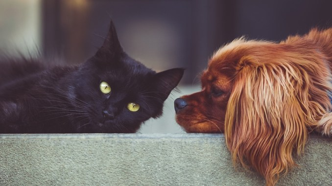 hund-katze-futter-barf