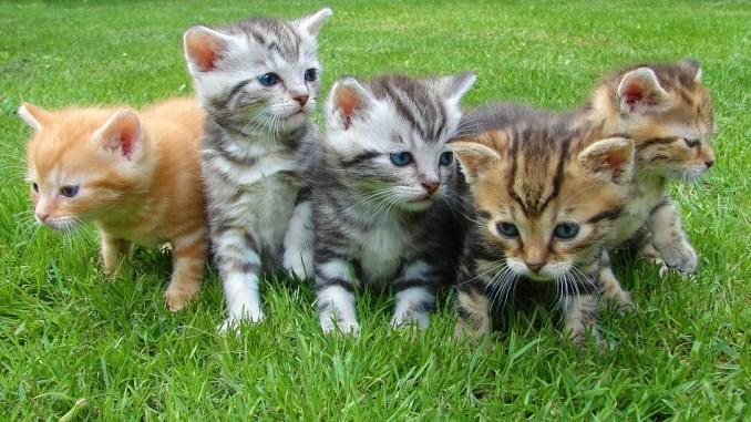 Katzen-Babys