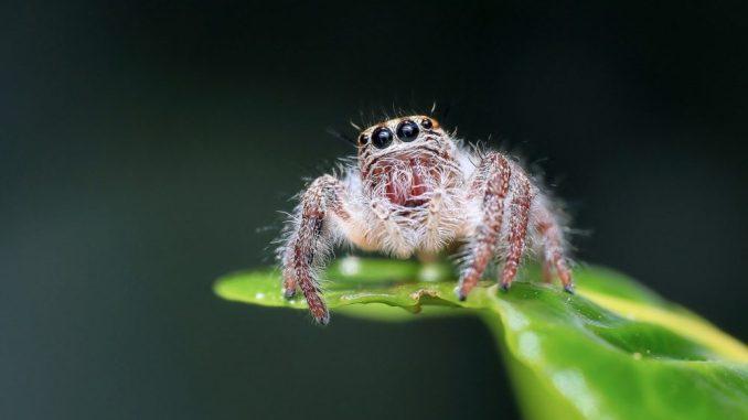angst-vor-spinnen-loswerden