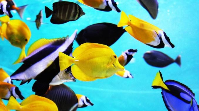 aquarium-fuer-einsteiger