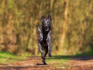heilerde-bei-hunde