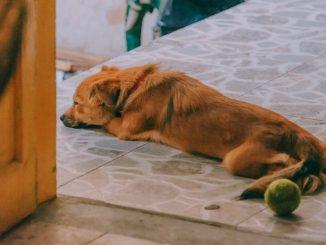 rescue-tropfen-hunde
